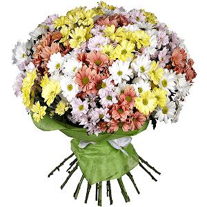 Хризантема кустовая (25 шт.)